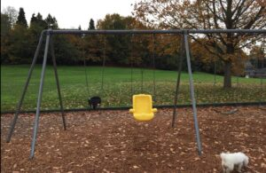 an ADA swing at the PlayGarden