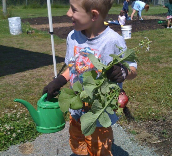 Jack at age 4 harvesting from the garden